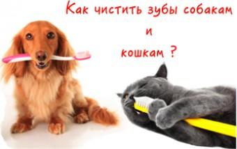 Как чистить зубы собакам и кошкам!
