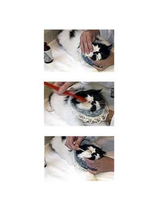 Eye Envy раствор, лосьон для кошек