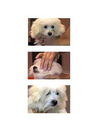 Eye Envy лосьон, раствор для собак