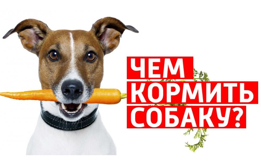 Корма для собаки. Выбираем полезные